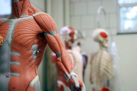 Evaluación y Ejercicio para el hombro Sindrome Subacromial